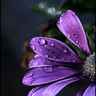 Purple Water dropped flower by Melody Shanahan-Kluth