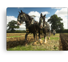 Horses Ploughing 2 Canvas Print