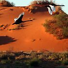 Desert Swans by craignoble