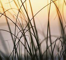 Velvet Grass by Jill  Ledet