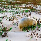 White Wombat by Mark Higgins
