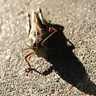 Mr. Grasshopper by mentis
