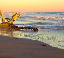 Drift Wood, Goleta, California by Eyal Nahmias