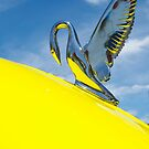 Bird on the bonnet by BigAndRed