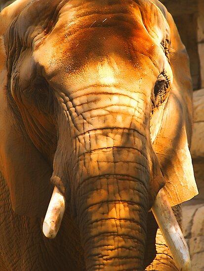 African Elephant by Wendy Mogul