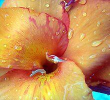 Orange Crush by Leah Highland