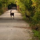 A Glimpse of Deer by Lori McCreery
