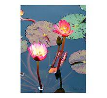 Pond Lillies Photographic Print