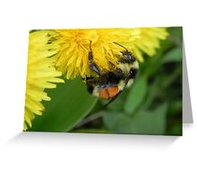 Pollen Gatherer Greeting Card