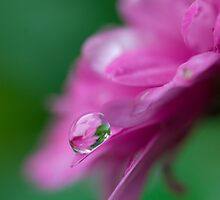 Droplet V by Leisa  Hennessy