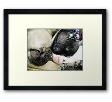 Pooped Puppies Framed Print