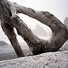 Driftwood by Mark Ramstead