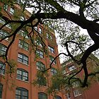Killer View; JFK Book Depository by mik013
