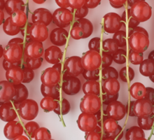 Red Currants as a Cooking Ingredient and Flavor   Sticker