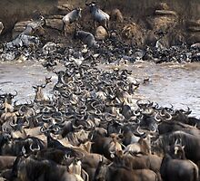 Wildebeest Crossing by JaneRia