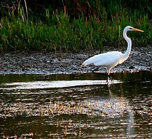 White Crane by colm