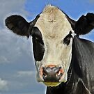 Only Have Eyes For Moo by Barrie Woodward