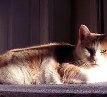 Basking In the Sun by nikspix
