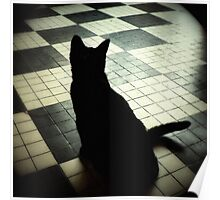 Cat shadow... Poster