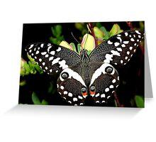 Citrus Swallowtail Greeting Card