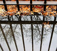 Puddles and Leaves by Alberto  DeJesus