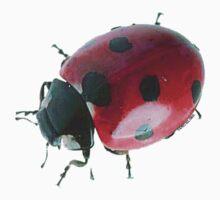 Ladybug by Samitha Hess Edwards