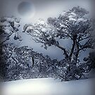 Winter  by PhotoDream Art