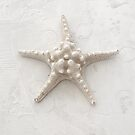 White Starfish by Antaratma Images