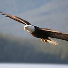 Eagle in the light by zpaperboyz