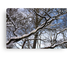 Wrapped in Winter's Cold Embrace Canvas Print