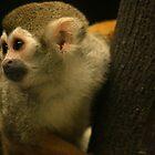 Golden Monkey by Dave Cauchi
