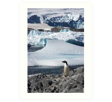 """Adelie Penguin  ~  """"and this is my backyard"""" Art Print"""