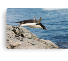 "Adelie Penguin ~ ""I Can Fly"" Canvas Print"