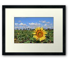 Sunny Hillside Framed Print