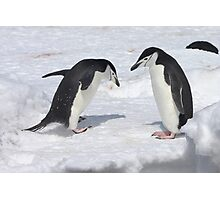 "Chinstrap Penguins ~ ""Konnichiwa (hello)"" Photographic Print"