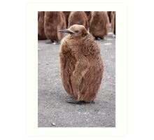"""King Penguin chick ~ """"Mirror Mirror on the wall, who's the........"""" Art Print"""