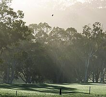 Morning Rays by Samuel Gundry