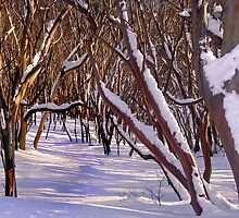 Howqua Snowgums, Mount Buller by Craig Mitchell