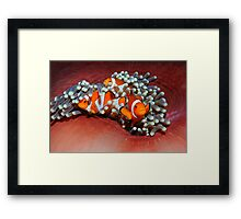 Nemos Home Framed Print