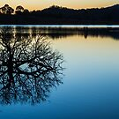 Wyaralong reflection by Brent Randall