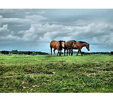Three Horses Facing The Storm Photographic Print