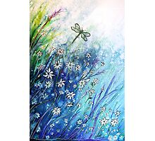 Dainty Daisies Photographic Print