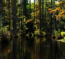 Swamp lights and shadows by photosan