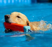 Dock Diving • Retriever by 2woofs-1meow