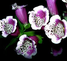 Foxgloves, Explorations in Inner Space by Julie Marks