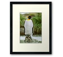 The Penguin King Framed Print