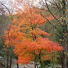 A Tree In Autumn by RickDavis