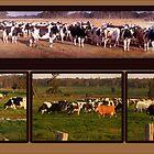 Farm Scenes by Wendy  Slee
