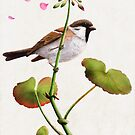 sparrow and geranium by bymuravka