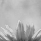 Just the Petals by photomama4